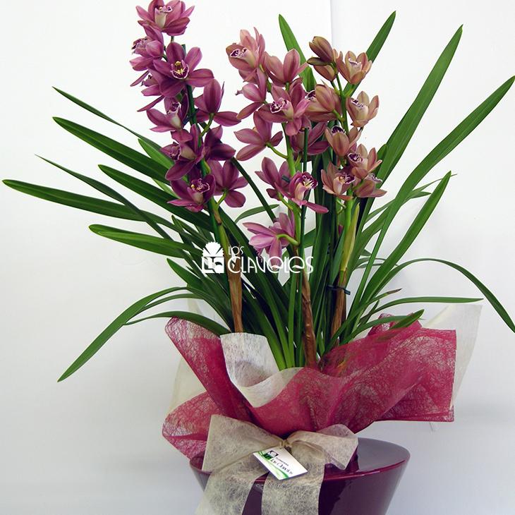 flores-fiesta-07